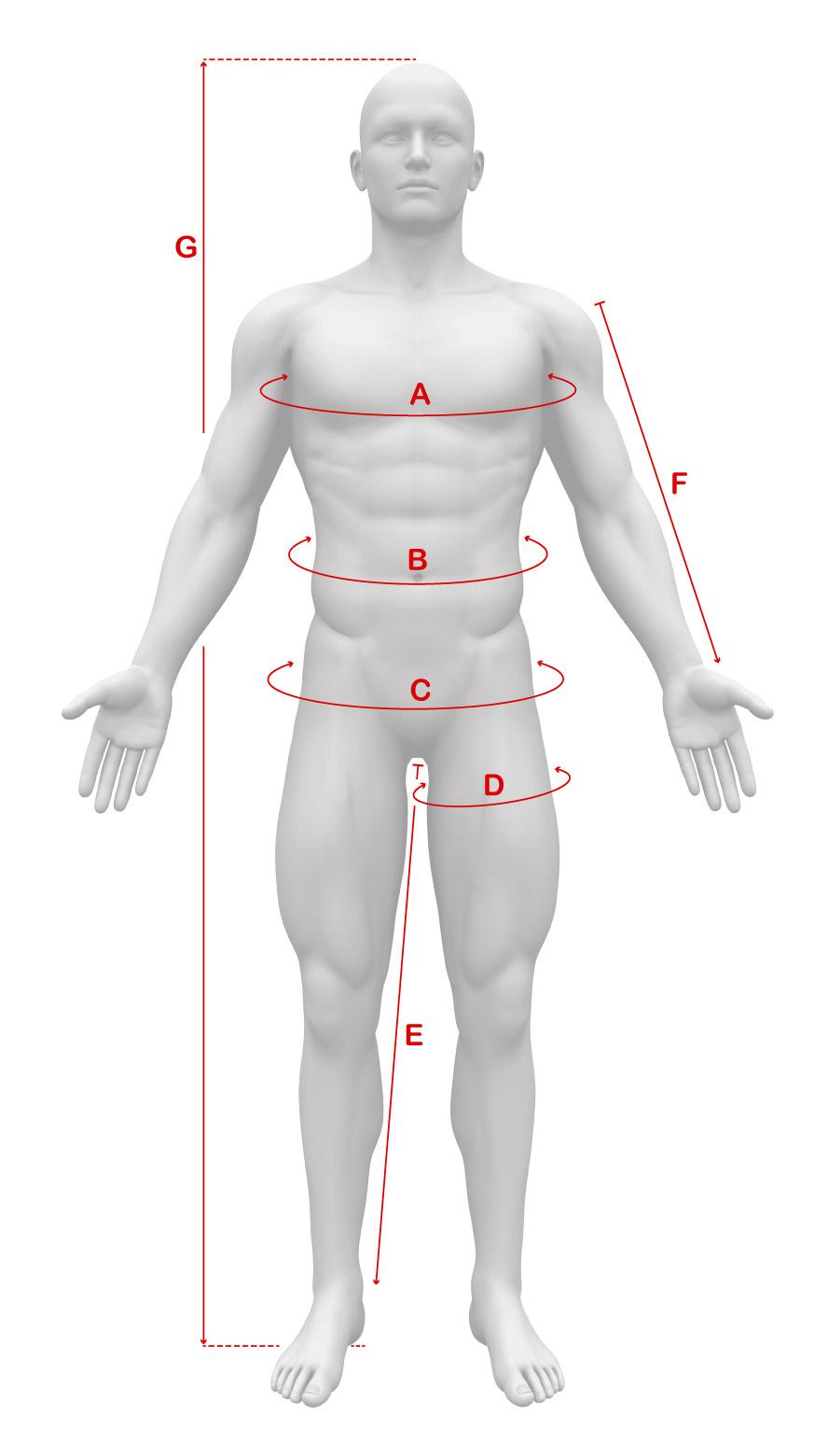 body-male-measurements